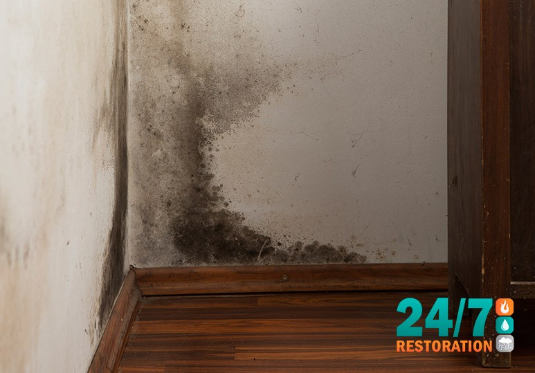 Black Mold Removal Calgary