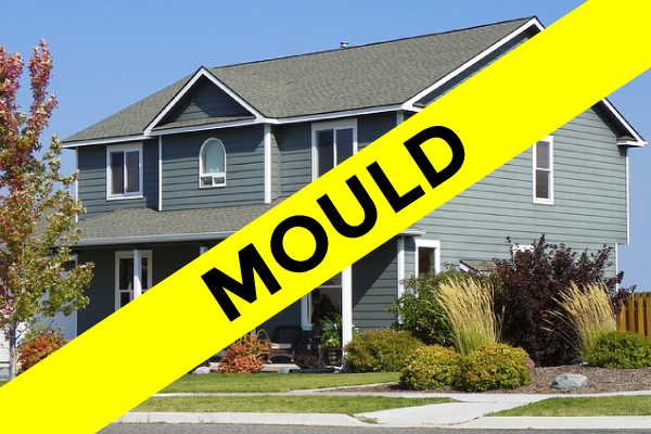 Testing for Mould in Your Calgary Home