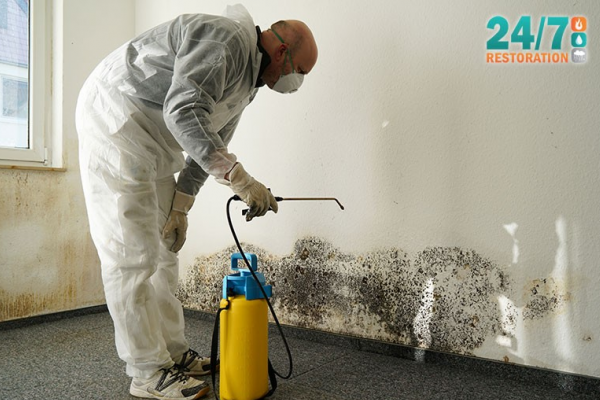 Affordable Mold Removal